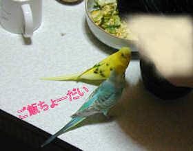 P7020023.jpg
